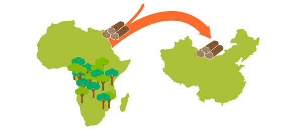 Map of Africa with arrow showing timber experts to China