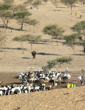 Pastoralists in Niger (Photo: Stephen Anderson)