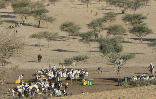 Pastoralists in Niger