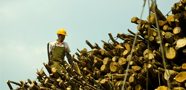 Commercial logging in Tengchong, China. Photo: Simon Lim