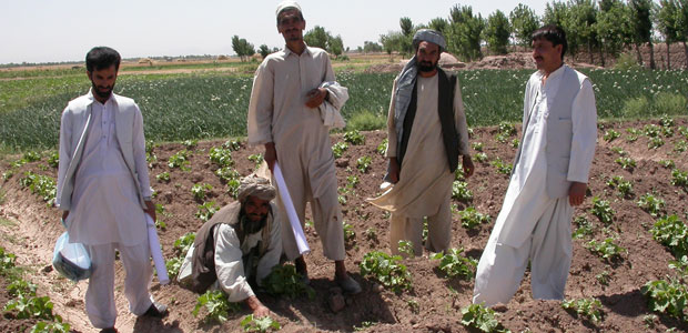 Afghan farmers and extension workers assess an okra field in Balkh Province, Northern Afghanistan (Photo: Barbara Adoph)