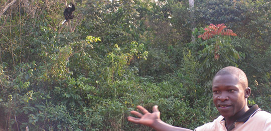 Phillip Kihumuro, an assistant Conservation Officer, points to a wild chimpanzee in Uganda.