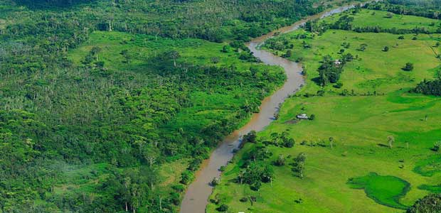 Aerial view of the Amazon rainforest - lush green landscape with river running through it.
