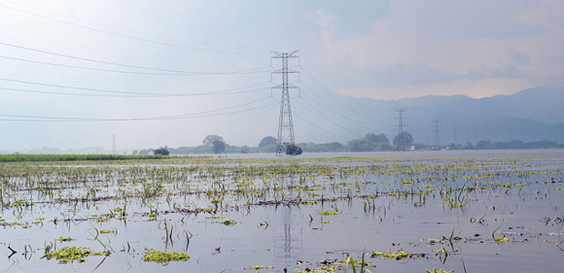 Flooded sugar cane fields near Colombia's third largest city, Cali, during an intense rainy season.