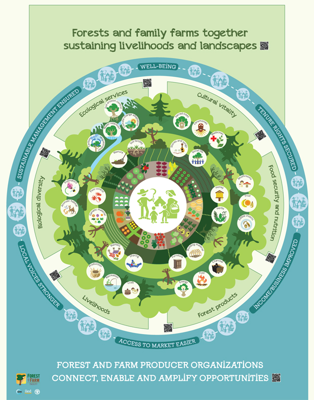 An FAO infographic that illustrates the relationship between forests and family farms