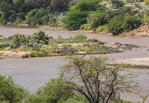 The Ewaso Ng'iro River, in Isiolo County's Shaba National Reserve, Kenya where pilot projects to support adaptation 'may not yet be perfect, but have the right idea' (Photo: Ninara, Creative Commons via Flkckr)