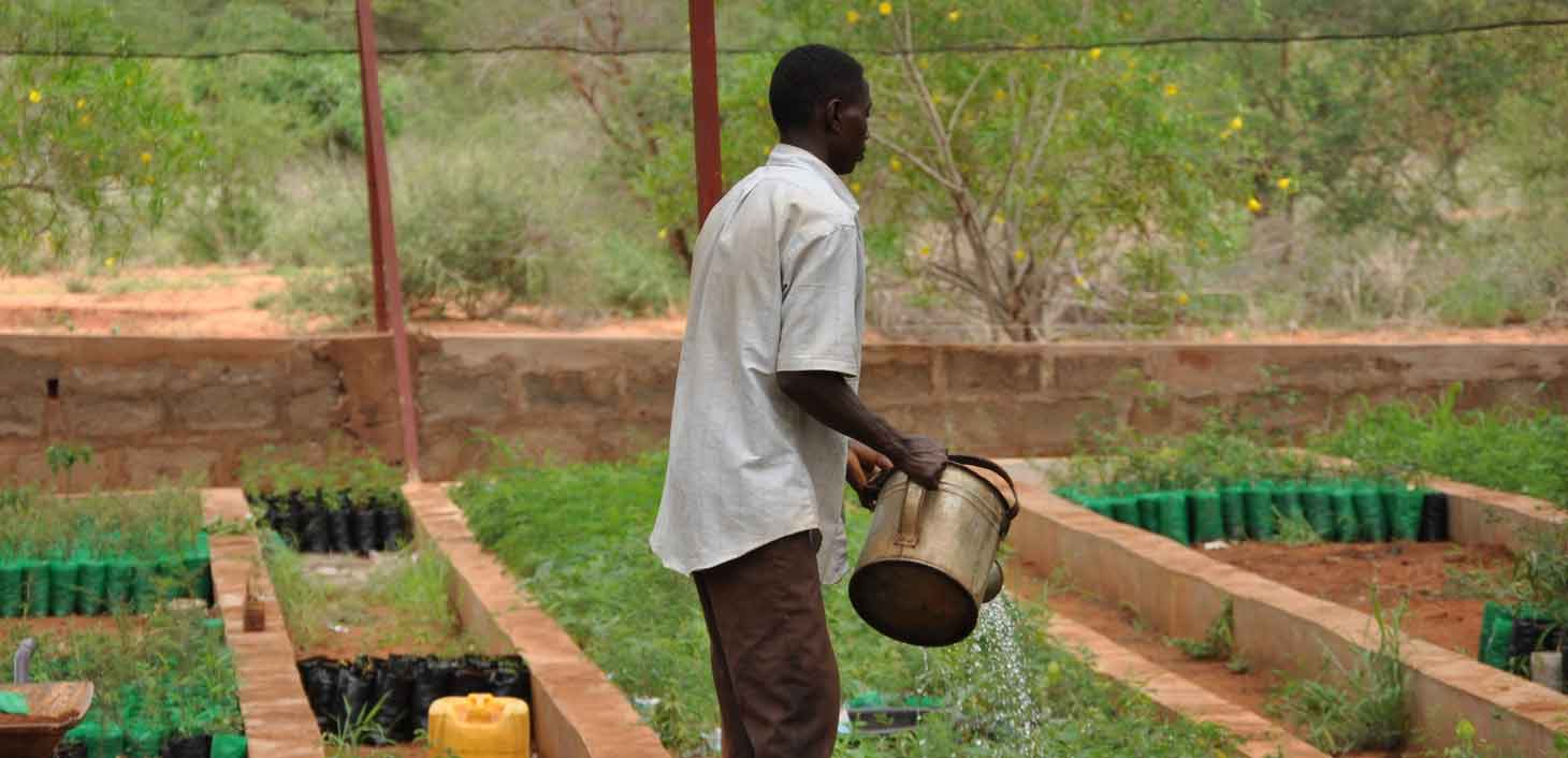 A man waters seedlings at a nursery at the Rukinga Wildlife Sanctuary in Kenya managed by Wildlife Works Carbon.
