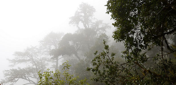 Early morning in a forest in Nepal's Langtang valley.