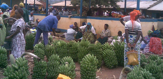 Women stand beside bananas in a market in western Uganda.