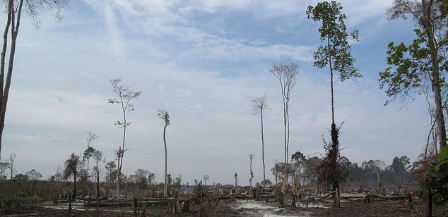 A forested area in Mondulkiri province, eastern Cambodia that is being cut down and burned. Few trees remain standing in the picture.