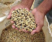 Dehusked and dried coffee beans at a farm in Cauca, southwestern Colombia (Photo: Neil Palmer/CIAT, Creative Commons, via Flickr)