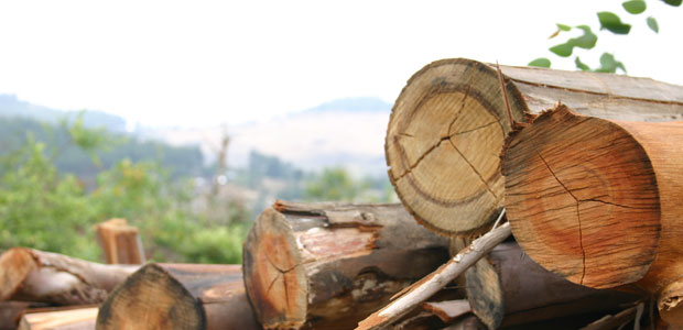 Logs from a community-managed forest in Ethiopia.