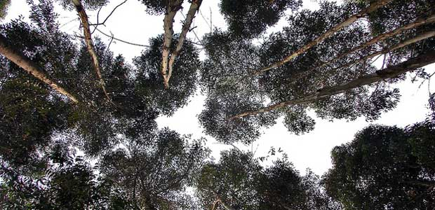 A forest canopy in Uganda.