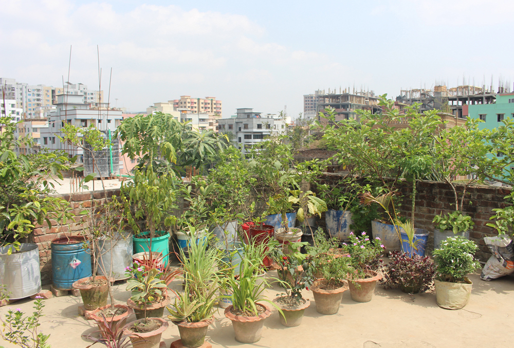 Rooftop garden in bangladesh. Roof Garden in Bangladesh ...