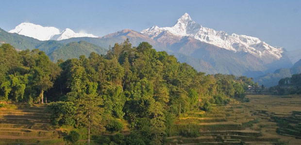 Image result for forestry nepal
