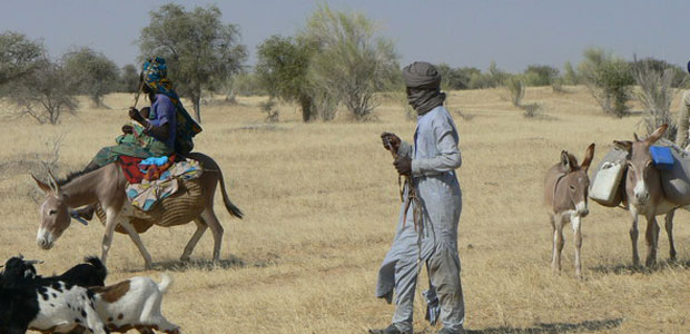 Pastoralists walk with their donkeys and goats.