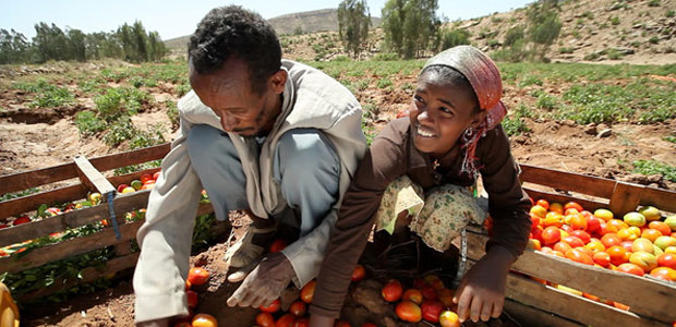 Farmers sort tomatoes in Ethiopia.