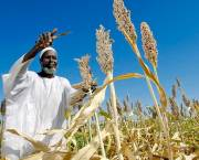Does the development community focus too strongly on smallholders? (Credit: Flickr/United Nations Photo)