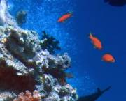 Coral reefs provide us with goods worth hundreds of billions of dollars but are in decline. Copyright: 2004 Richard Ling