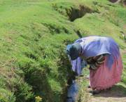 A woman tends an irrigation channel in the Bolivian 'altiplano,' or highlands.