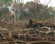 Deforestation and fire ravage a forest area in Uganda (Photo: Paul Hatanga)
