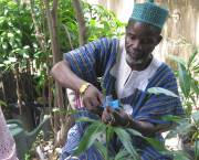 Northern Ghana: a village chief learns forestry skills. Rural communities need investment to build up forest and farm enterprises and link them to markets and support networks (Photo: Treeaid, via Creative Commons)