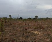 Slash and burn, pictured in the Mopeia district, Zambezia province, Mozambique, has a noble motive – feeding families - but it is not sustainable (Photo: Isilda Nhantumbo/IIED)