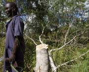 A man stands by a tree stump in Mozambique.