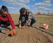 The Asian Development Bank is helping herders in Mongolia combat the consequences of climate change by training them to cultivate fodder or animal feed that is more resilient towards extreme weather changes, using plants that are adapted to the area (Photo: Asian Development Bank, Creative Commons, via Flickr)
