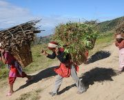 Nepalese women carry wood harvested sustainably from a forest. Forests cover nearly half of Nepal (Photo: Bikas Rauniar/Department for International Development, Creative Commons, via Flickr)
