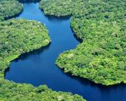 Aerial view of the Amazon Rainforest. Photo: Neil Palmer/CIAT