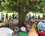 A large group of people sit under a tree and talk.