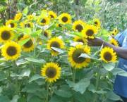 A smallholder farmer stands by a bunch of sunflowers in Thika, Kenya.