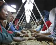Ethiopian women sort coffee beans at a long table. IIED's Critical Theme will explore gender equality issues (Photo: Wikipedia Commons)