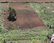 A Maasai farmer watches farmers carry out afforestation (Photo: Matt Wright/IIED)