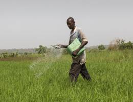 Seydou Haidara, 35, spreading chemical fertiliser on his 0.10 ha rice field. He has another 0.75 ha plot elsewhere and only works in agriculture because the income from both fields is enough to feed the family (Photo: Mike Goldwater/GWI)