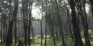 Forests image