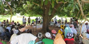 Growing Forest Partnerships meeting beneath the trees in Burkina Faso (Photo: Duncan Macqueen/IIED)