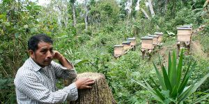 A beekeeper in Guatemala finds an alternative source of income. Photo: Todd Post/Bread for the World Institute