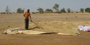 A farmer near Bagré dam in Burkina Faso dries paddy rice (Photo: Barbara Adolph/IIED)