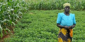 Farmer stands in her field of groundnuts boarded by maize in Malawi.