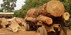 Logging trucks in Ghana: legislation requires that to charge stumpage fees on harvested timber at levels that keep the timber industry under control (Photo: Duncan Macqueen/IIED)