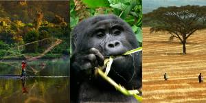 Images for biodiversity, conservation and poverty reduction (Photos: Ricky Martin, Douglas Shiel, Tim Cronin)