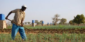 A farmer in Tattaguine, Senegal benefits from an irrigation project. IIED is advocating for the Green Climate Fund to speed up the process of getting finance to local levels, those who need it most (Photo: Ryan Kendrick Smith, Creative Commons, via Flickr)