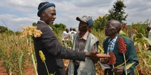 Kenya: Farmers visit a crop trial site to select the best sorghum varieties for climate resilience. Most climate change adaptation is done day-to-day by farmers, pastoralists, fishers and the urban poor.  (Photo: S. Kilungo, CCAFS, Creative Commons via Flickr)