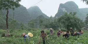 Farmers in Guangxi and Yunnan provinces in Southwestern China have responded to climatic adversity by innovating to increase productivity using less water (Image: IIED)