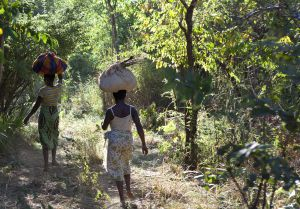 Villagers walk through a forest reserve in Mozambique (Photo: Mike Goldwater)
