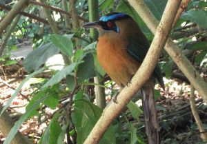 Native bird in a payments for environmental service project in Costa Rica (Photo: Ina Porras)