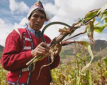 Peru's farmers are working with scientists on planting to adapt to climate change (Photo: Adam Kerby)