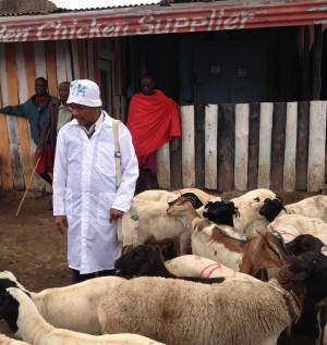 A goat can be bought for 6500 Kenyan Shillings (about £43) (Photo: Hannah Reid/IIED)